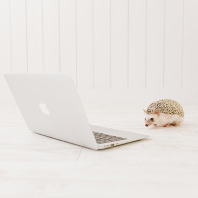 パソコンの前にいるハリネズミ